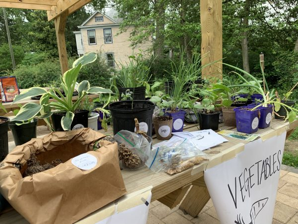 Plant & Seed Swap 2019